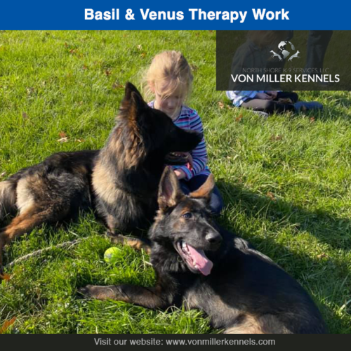 Basil and Venus enjoying the day with a little therapy work❤️❤️❤️Neither dog is for sale !!!!!