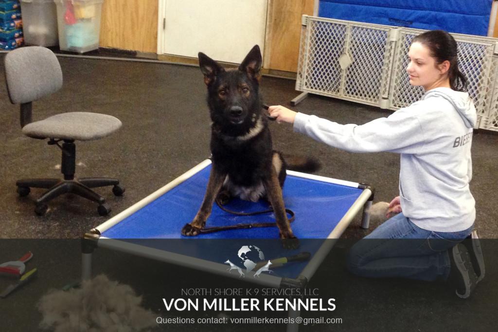 VonMillerKennels_Grooming