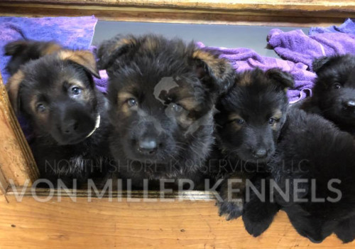 VonMillerKennels_May302018litter
