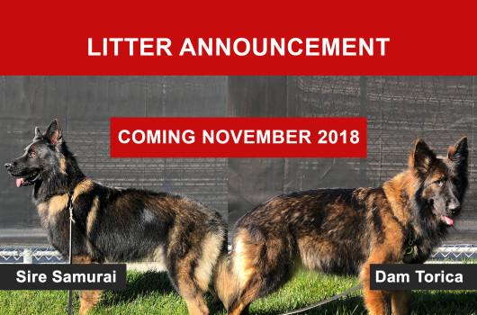 litterannouncement-germanshepardsnov18-2
