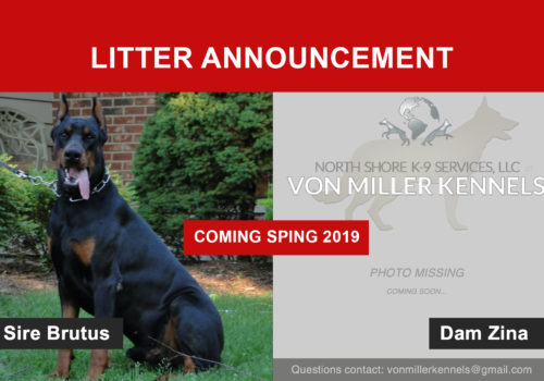 litterannouncement_DOBERMANUPDATE