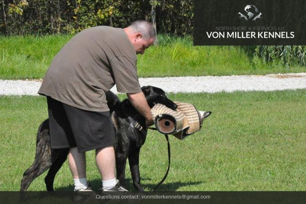 VonMillerKennels_Dutch-Shepherd-3