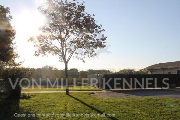 VonMillerKennels_Facility_watermarked_4