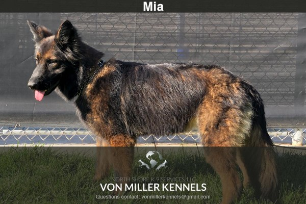 VonMillerKennels_Mia-3