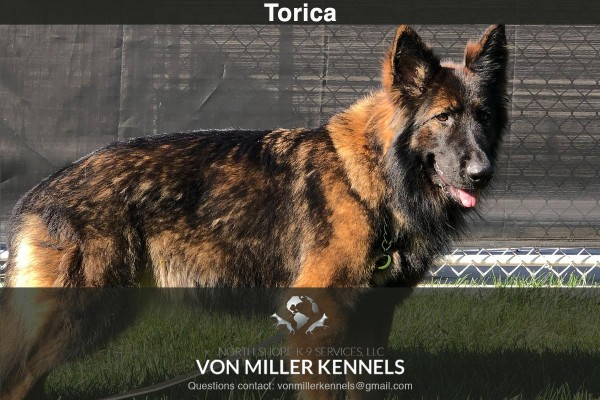 VonMillerKennels_Torica