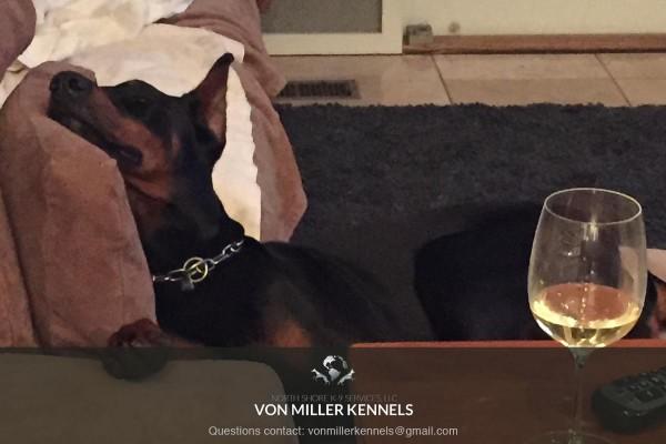 VonMillerKennels_dogdrinks