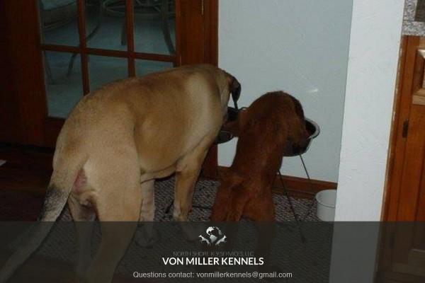 VonMillerKennels_drinkingbuddies