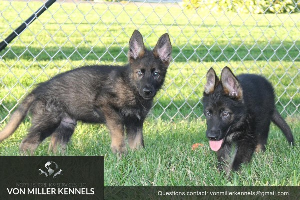 VonMillerKennels_pupppies_group_2 (1)