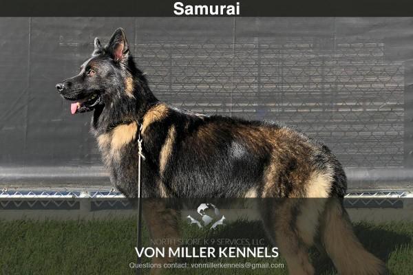 VonMillerKennels_Samurai-6