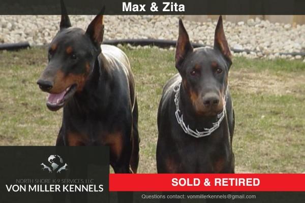 VonMillerKennels_MAX-ZITA_DOBERMAN-2